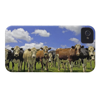 Herd of cattle and overcast sky iPhone 4 Case-Mate case