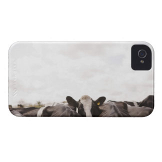 Herd of cattle and overcast sky iPhone 4 cover