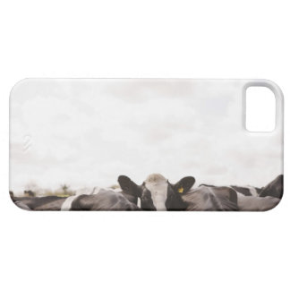 Herd of cattle and overcast sky iPhone 5 cases
