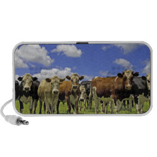 Herd of cattle and overcast sky laptop speaker