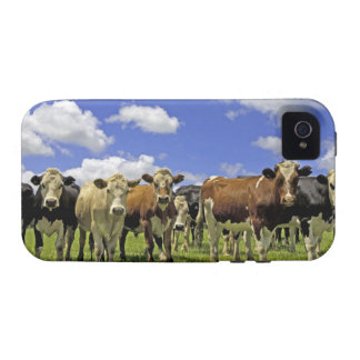 Herd of cattle and overcast sky vibe iPhone 4 cases