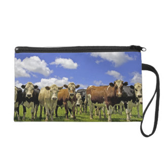 Herd of cattle and overcast sky wristlet