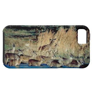 Herd of deer 2 iPhone 5 case