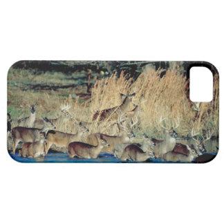 Herd of deer 2 iPhone 5 cover