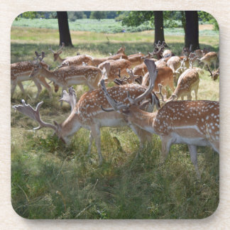 Herd of deer in a park hard plastic coasters