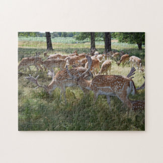 Herd of deer in a park photo puzzle
