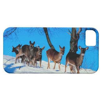 Herd of deer iPhone 5 cases
