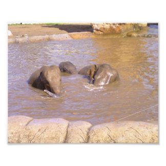 Herd of Elephants Photo Print