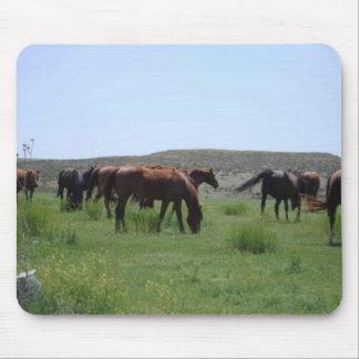 Herd of Horses - Logan County, Kansas Mouse Pads