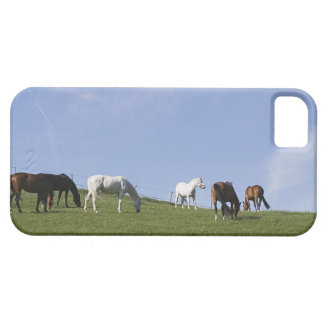 herd of horses on meadow barely there iPhone 5 case