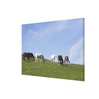 herd of horses on meadow canvas print