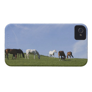 herd of horses on meadow Case-Mate iPhone 4 case
