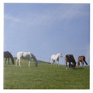 herd of horses on meadow tile