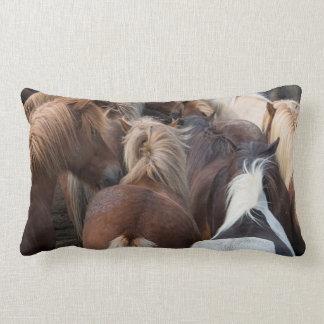 Herd of Icelandic horse Cushion