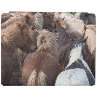Herd of Icelandic horse iPad Cover