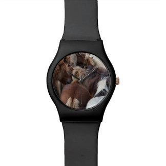 Herd of Icelandic horse Watch