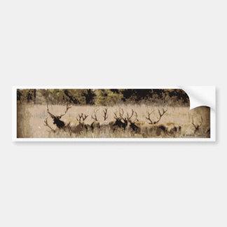 Herd of Young Bull Elk Bumper Sticker