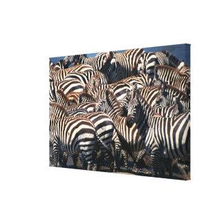 Herd of zebras 2 canvas print