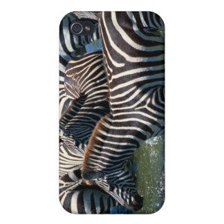 Herd of zebras 2 iPhone 4 cases