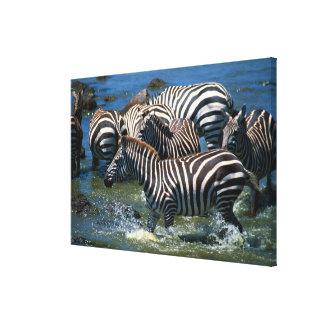 Herd of zebras canvas prints
