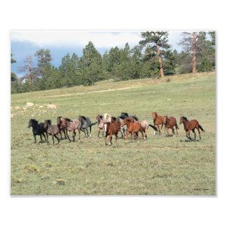 Herd on the Run Art Photo