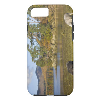 Herdwick sheep at Friars Crag, Derwentwater, 2 iPhone 8/7 Case