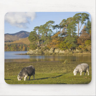 Herdwick sheep at Friars Crag, Derwentwater, 2 Mouse Mat