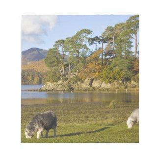 Herdwick sheep at Friars Crag, Derwentwater, 2 Notepad