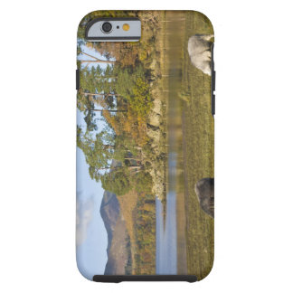 Herdwick sheep at Friars Crag, Derwentwater, 2 Tough iPhone 6 Case