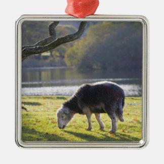 Herdwick sheep at Friars Crag, Derwentwater, Christmas Ornament