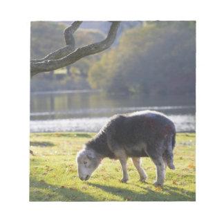 Herdwick sheep at Friars Crag, Derwentwater, Notepad