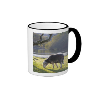 Herdwick sheep at Friars Crag, Derwentwater, Ringer Mug