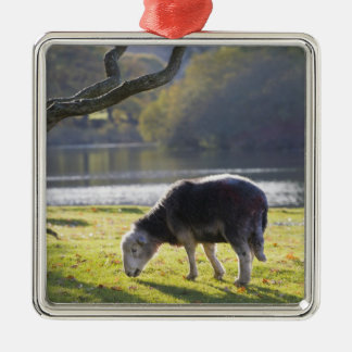 Herdwick sheep at Friars Crag, Derwentwater, Silver-Colored Square Decoration