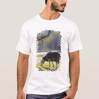 Herdwick sheep at Friars Crag, Derwentwater, T-Shirt