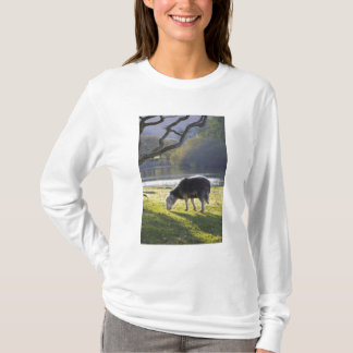 Herdwick sheep at Friars Crag, Derwentwater, T-Shirt