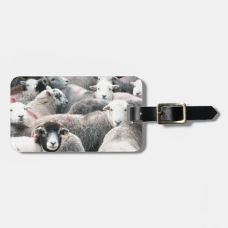 Herdwicks At Buttermere Luggage Tag