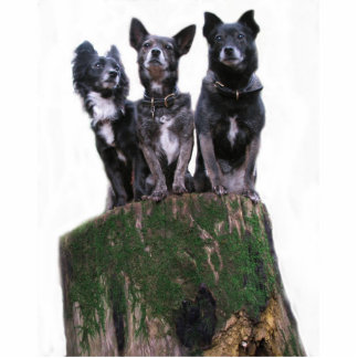 Here are the dogs on a log. standing photo sculpture