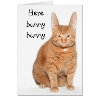 Here bunny bunny card