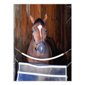 Here Comes Rosie in her Stall Photographic Print