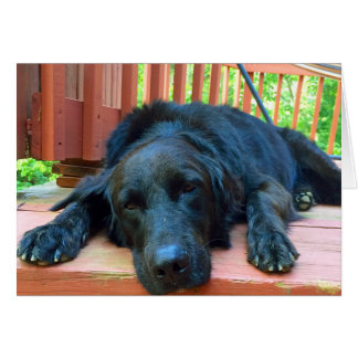 Here When You Need Me Black Dog Greeting Card