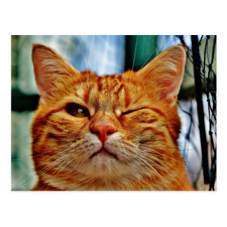 Here's Winking at You . . . Postcard