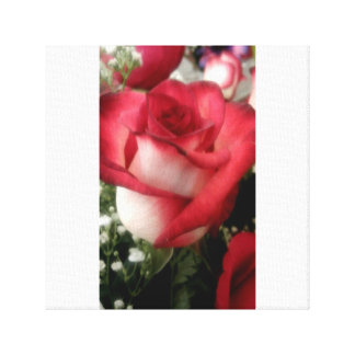 Here's your rose. canvas print
