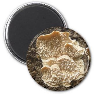 Hericium cirrhatum Mushroom Magnet