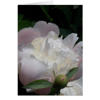 Heritage Peony III Stationery Note Card