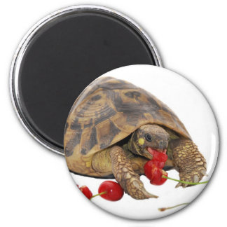 Hermann Tortoise and Strawberries 6 Cm Round Magnet