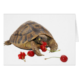 Hermann Tortoise and Strawberries Card