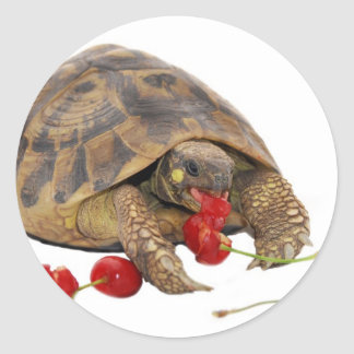 Hermann Tortoise and Strawberries Classic Round Sticker