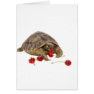 Hermann Tortoise and Strawberries Greeting Cards