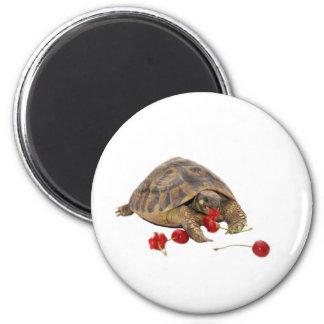 Hermann Tortoise and Strawberries Fridge Magnets
