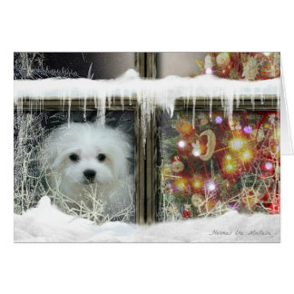 Hermes the Maltese Christmas Card